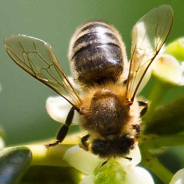 Wat jij kunt doen om (wilde) bijen te helpen: 7 tips