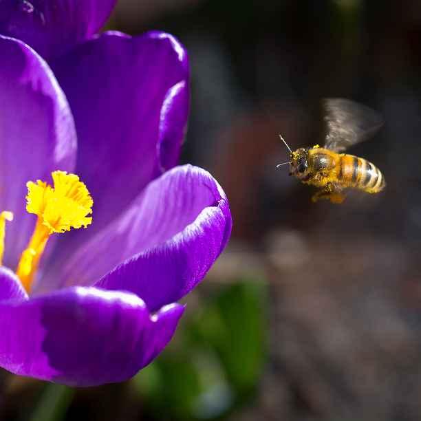 Onderzoek: Pesticiden vormen wereldwijde bedreiging biodiversiteit en ecosysteem